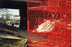 [photo, Red crab pots (traps), Chesapeake Beach, Maryland]